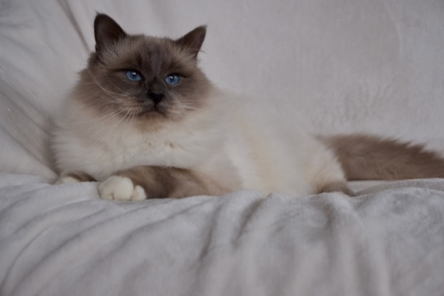 Azzurro is 2,5 years old