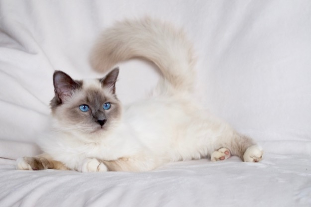 My lovable Azzurro