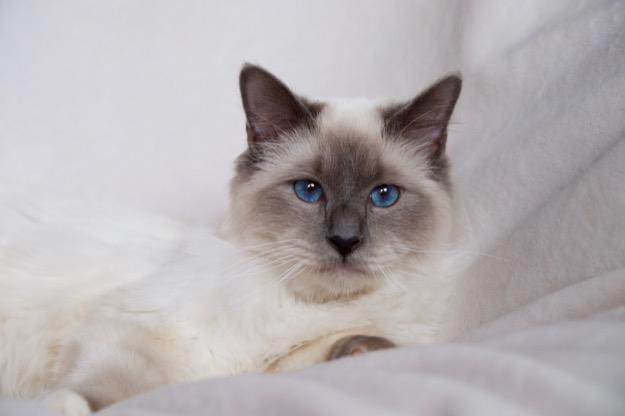 Azzurro as Godfather