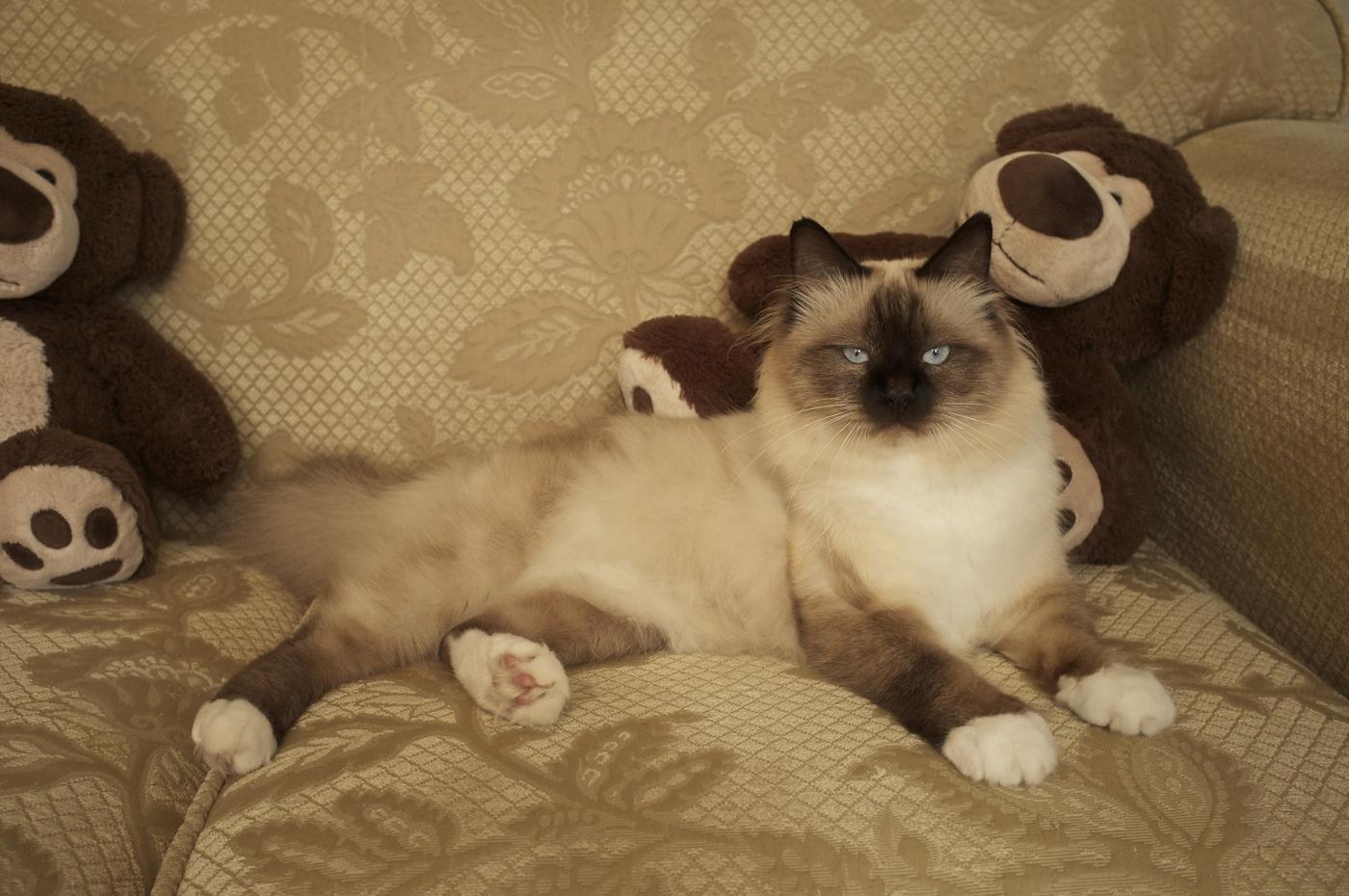 my teddy bear... :)
